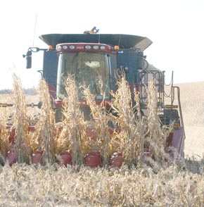 Corn harvest in Boone County.