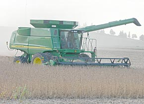 Combine leaves a dust trail while harvesting beans last week.