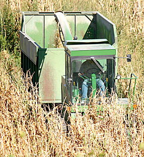 Local farmer Steve Johnson wraps up silage harvest in a field northwest of Albion last week.