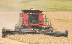 Soybean harvest west of Albion.