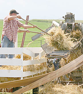 Threshing at Rae Valley Show