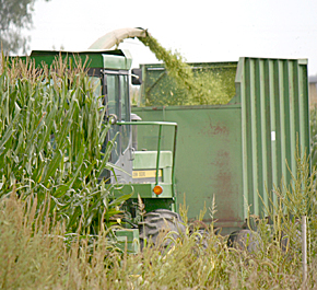 Silage harvest near Albion.