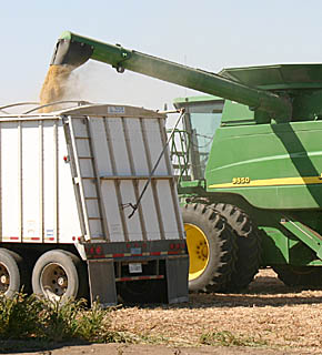 Combine unloads soybeans into a grain trailer south of Albion on Monday afternoon