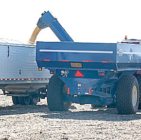 Semi tractor-trailer is loaded from a grain cart at the Dean Hamling farm.