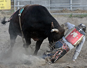 bullride-butted.jpg