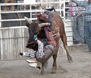 bullride-upside-down.jpg