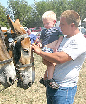 Petting the mules at Rae Valley Days.