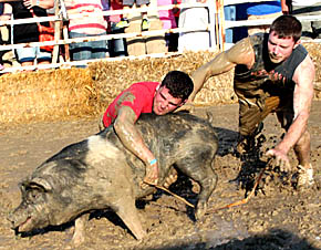 Greased hog contest at Petersburg.