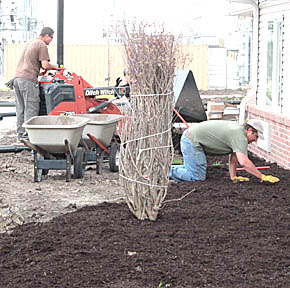 Construction workers install mulch on the north side of the Cardinal Inn.