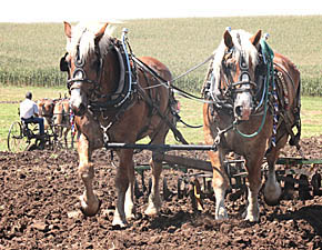 Horse-drawn farm implements are among the attractions at this weekend's show.
