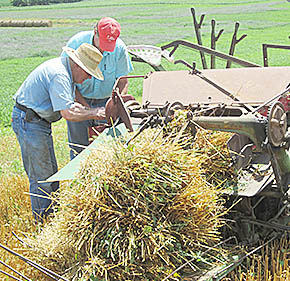 Walt Klein of Petersburg and Dave Miller of Oakdale recently cut and bundled oats for the threshing demonstration at Rae Valley Days