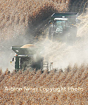 Corn harvest west of Albion.