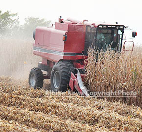 Combine harvests corn in a field south of Albion early this week.