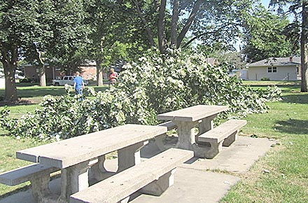 Anothet large limb on the ground at Fuller Park.