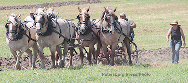 Plowing with a five-horse hitch at Rae Valley Days.