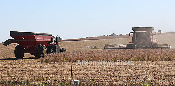 Soybean harvest east of Albion.