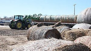 web, 3-21, hay available in Albion